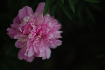 DSC_0506